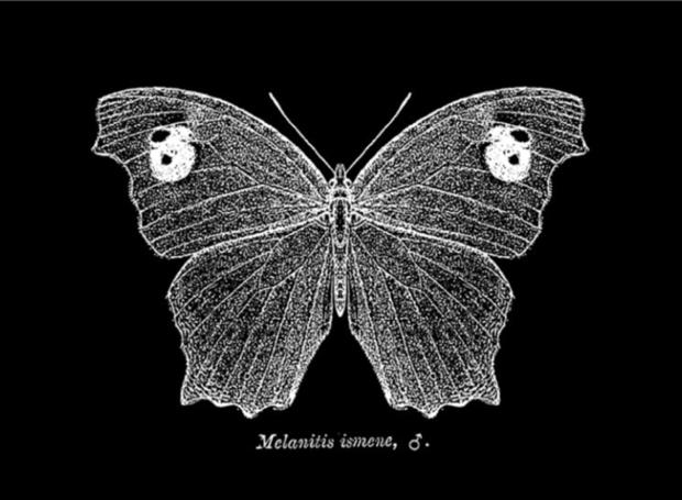 melanitis.leda030816